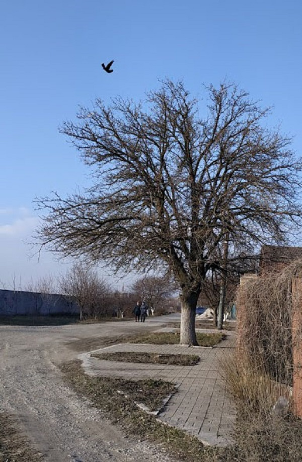 Малий елемент-птах зменшує домінуюче значення дерева