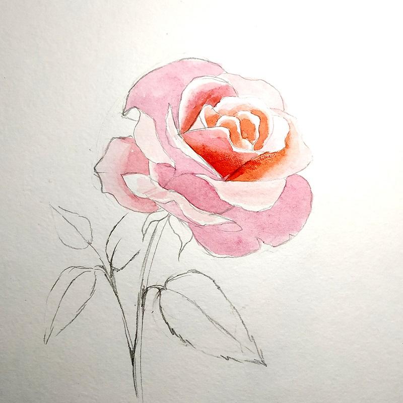 Окрашиваем внутренние части цветка розы