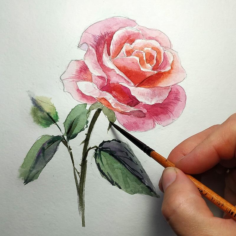 Рисуем листья и стебель розы