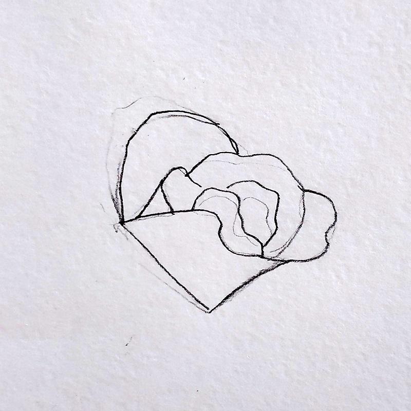 роза карандашом 2