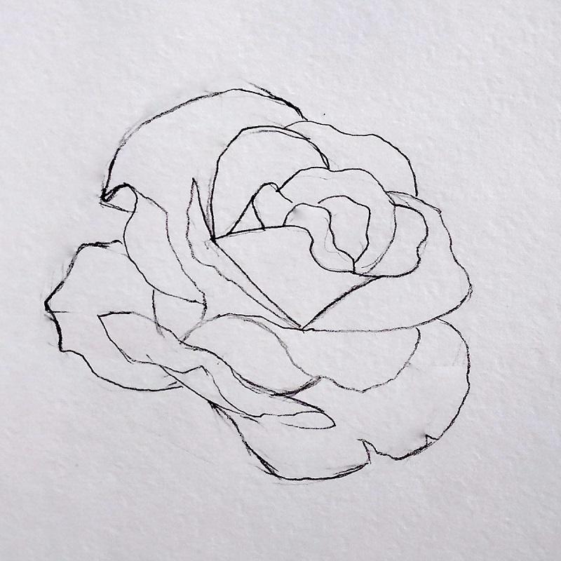 роза карандашом 4